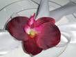 Lot de 24 orchidées 10cm  bordeaux autocollantes  - Occasion du Mariage