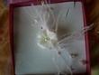 Parure de bijoux de mariage d'occasion (boucle d'oreille, bracelet et collier de mariée)