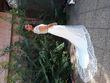 robe de mariee et voile - Occasion du Mariage