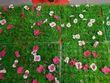 11 carrés de fausse verdure 25 x 25 cm avec fleurs  - Occasion du Mariage
