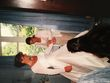 Robe de mariée en soie COURMAN  - Occasion du Mariage