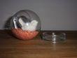 Boules transparentes avec oiseaux et gravier - Occasion du Mariage