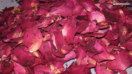 P tales de roses s ch es confettis mariage gard - Petales de roses sechees ...